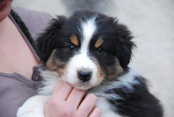 Mon futur chien!