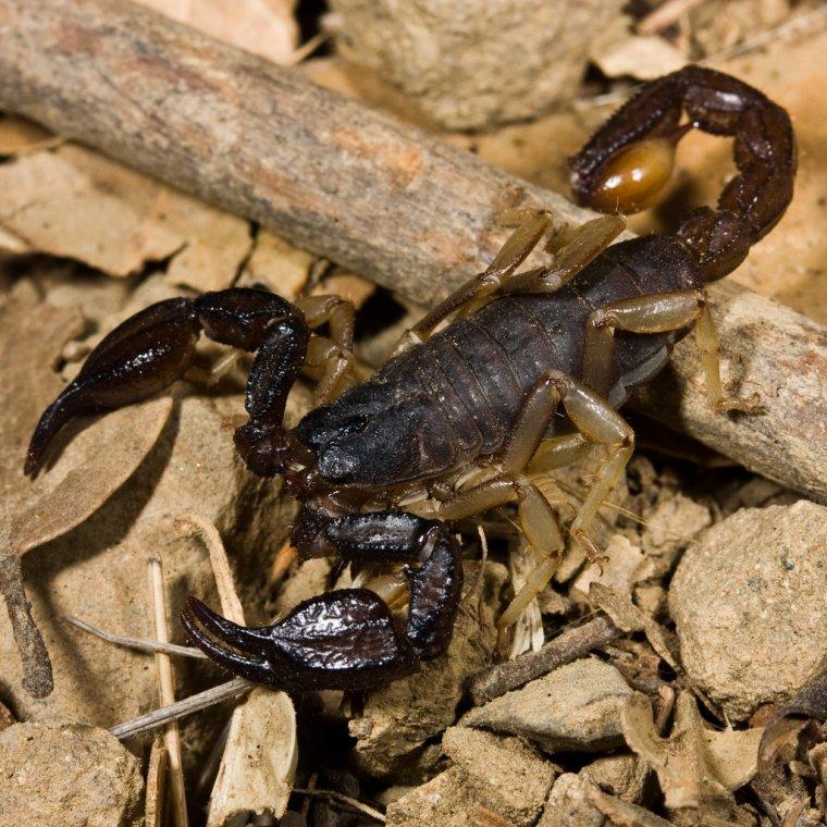Scorpion = Scorpius