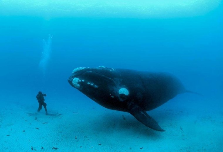 Baleine = Cetus