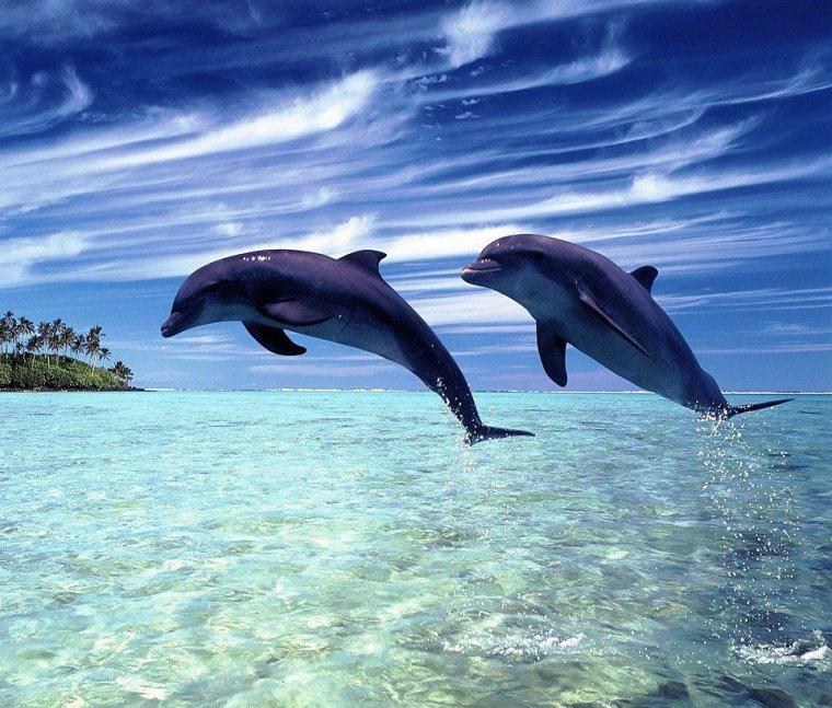 Dauphin = Delphinus