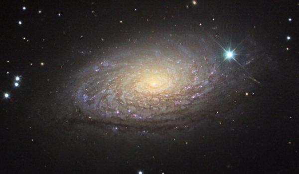 """Résultat de recherche d'images pour """"Galaxie du Tournesol"""""""