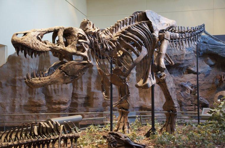 Humanoïdes reptiliens = Dinosauroïdes