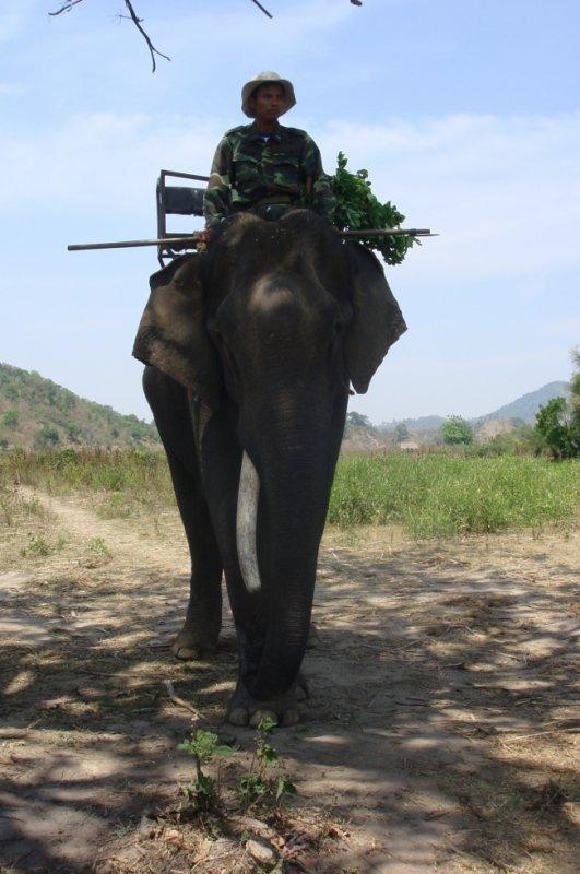 Balade à dos d'elephants