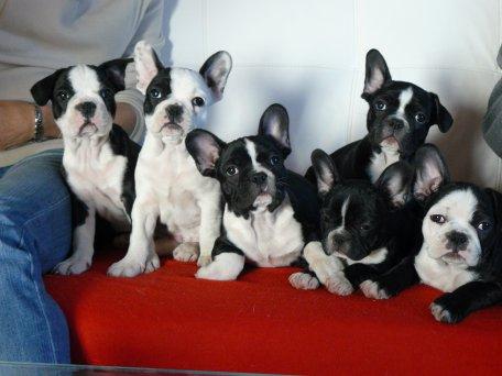 voici une petite photo de famille des 6 magnifiques bébés que ma Dakota nous a fait !!!!!