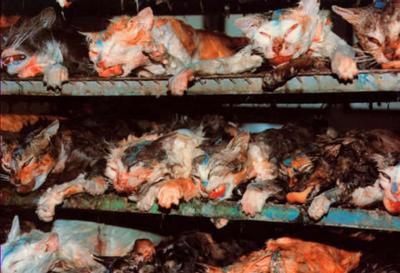 la vivisection