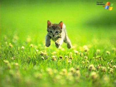 il est beau le chat qui cour