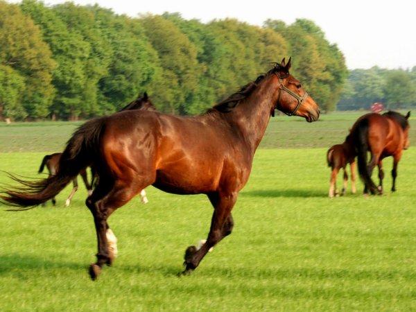 Un cheval au galop les animaux de catxlikex - Comment dessiner un cheval au galop ...