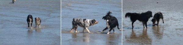 • Ballade Canine & Sortie à la Mer •