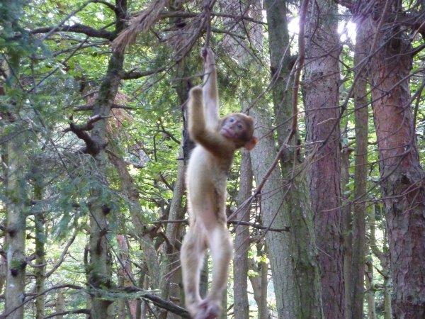 La montagne des singes en Alsace