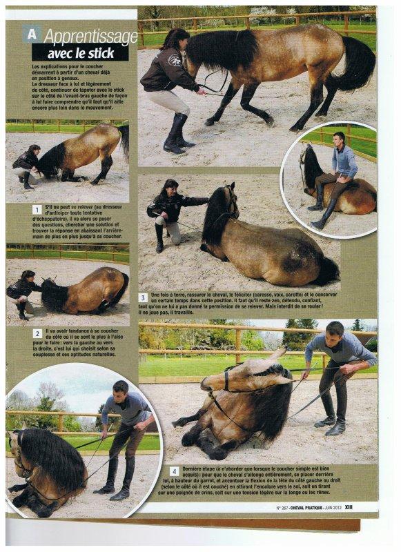 autre méthode pour le coucher: Nicolas Brodziak (source cheval magazine juin 2012)