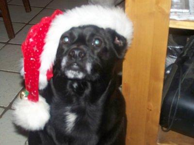 Cooper à l heure de Noel.