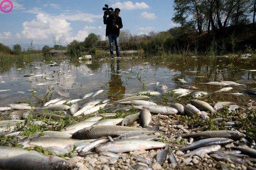 Pollution dans le Doubs .