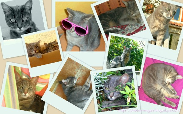 Montage de photos de mon chat