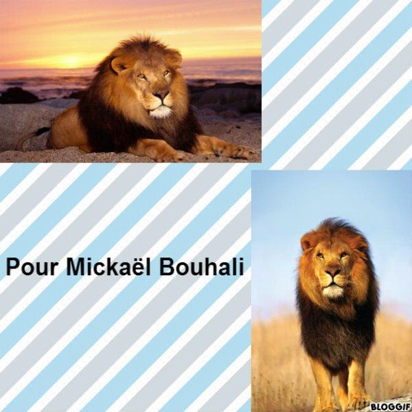 Montage 2 lions créé par moi pour Mickaël Bouhali