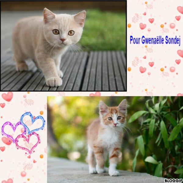 Montage 2 chats créé par moi pour Gwenaëlle Sondej