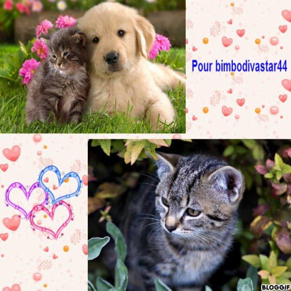 Montage 2 chats et un chien créé par moi pour bimbodivastar44