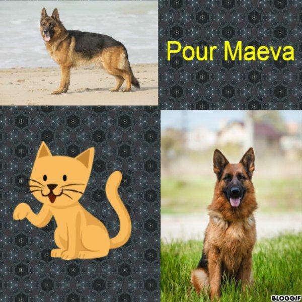 Montage 2 chiens créé par moi pour Maeva