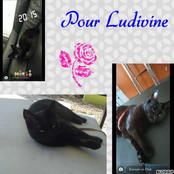 Montage un chat créé par moi pour Ludivine