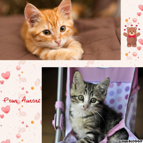 Montage 2 chats créé par moi pour Aurore