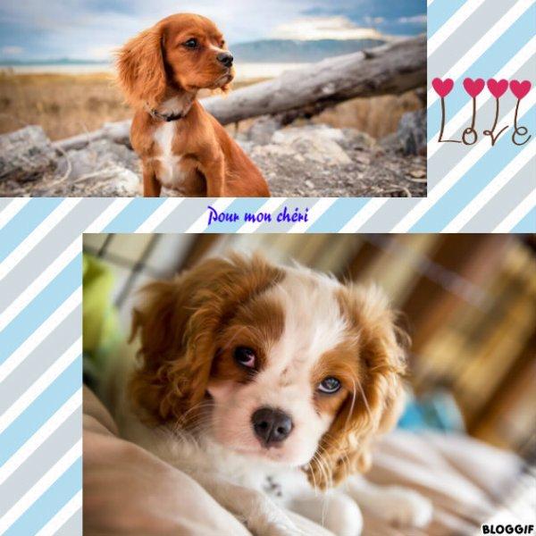 Montage 2 chiens créé par moi pour mon chéri