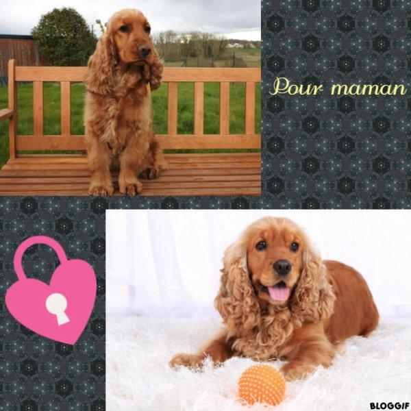 Montage 2 chiens créé par moi pour maman
