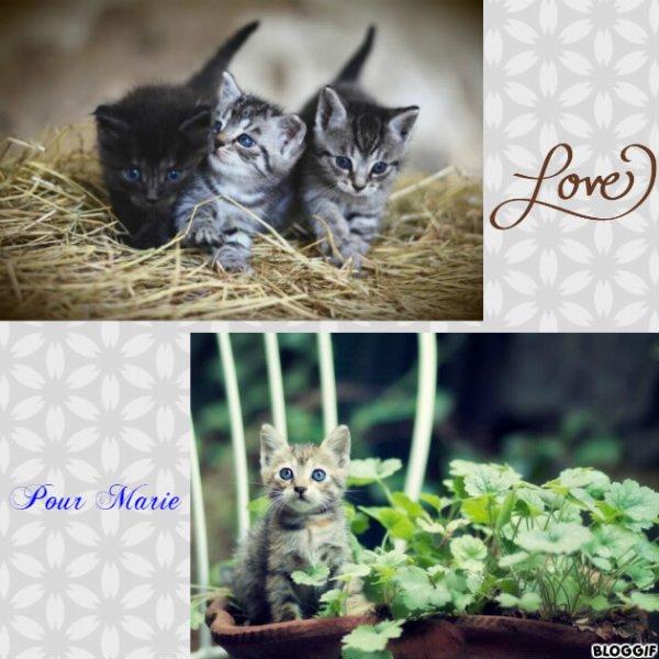 Montage 4 chats créé par moi pour Marie