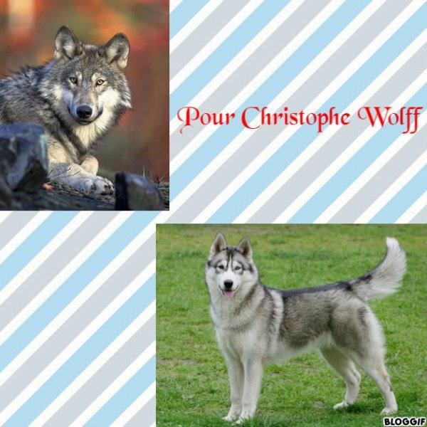 Montage un loup et un chien créé par moi pour Christophe Wolff