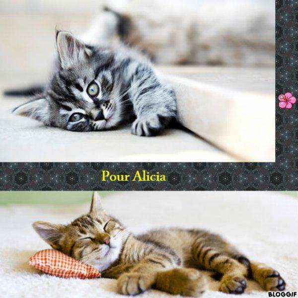 Montage 2 chats créé par moi pour Alicia