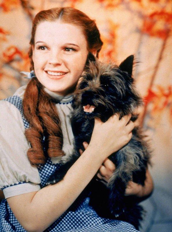 Image Le magicien d'Oz Dorothée et Toto