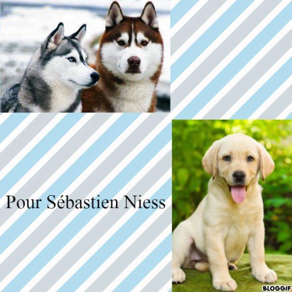 Montage 3 chiens créé par moi pour Sébastien Niess