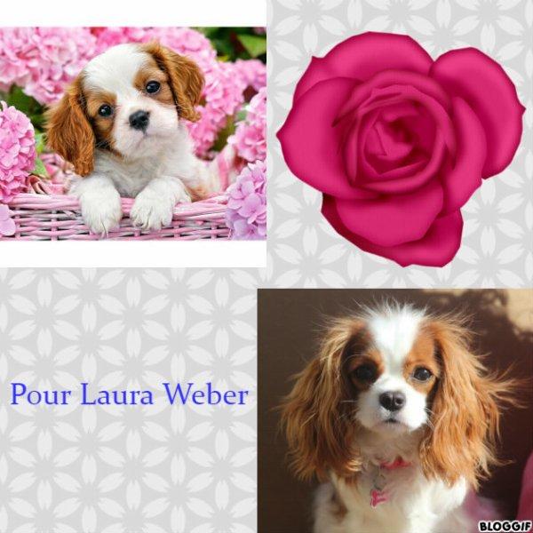 Montage 2 chiens créé par moi pour Laura Weber