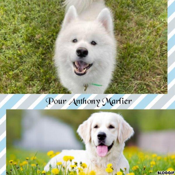 Montage 2 chiens créé par moi pour Anthony Marlier