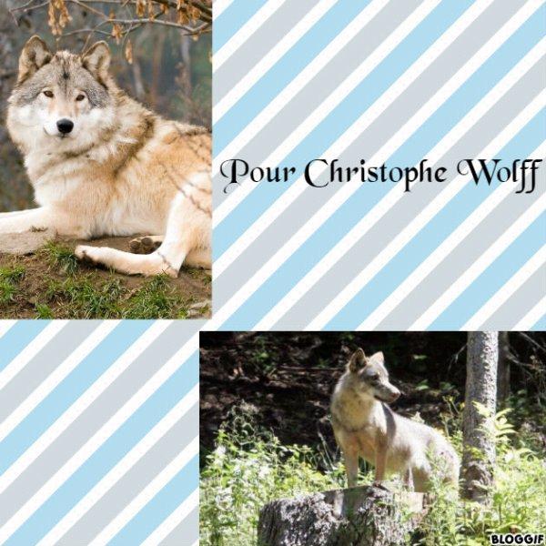 Montage 2 loups créé par moi pour Christophe Wolff