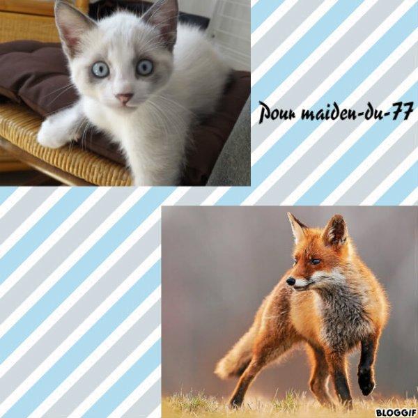 Montage un chat et un renard créé par moi pour maiden-du-77