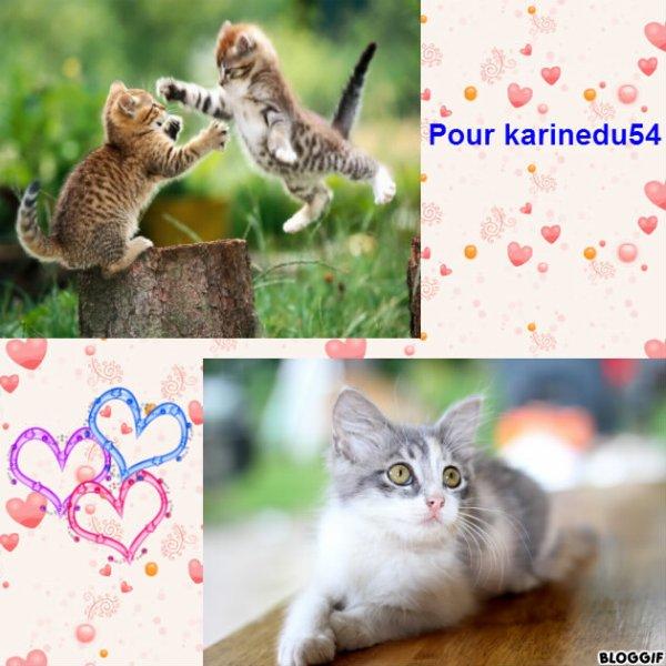 Montage 3 chats créé par moi pour karinedu54