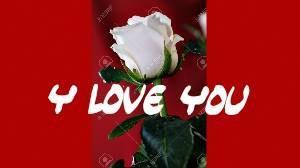 Bannière Une rose blanche Y Love You créé par xXx-gajeel-x-levy-26-xXx