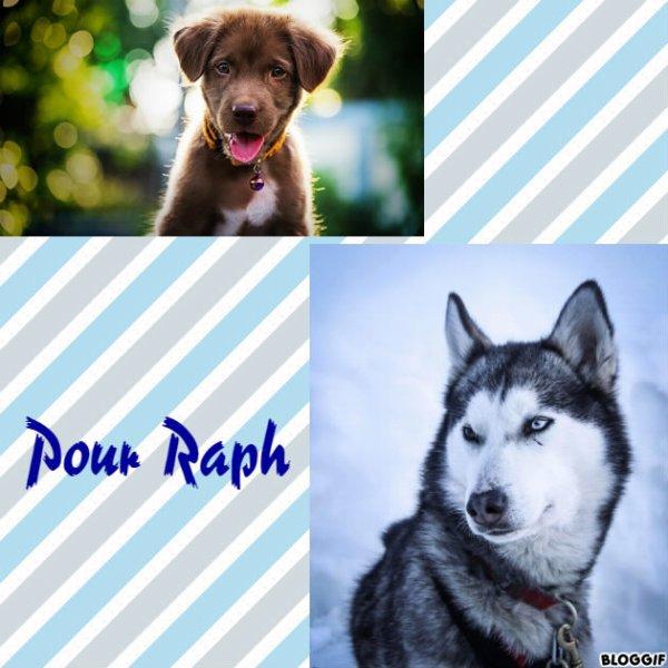 Montage 2 chiens créé par moi pour Raph