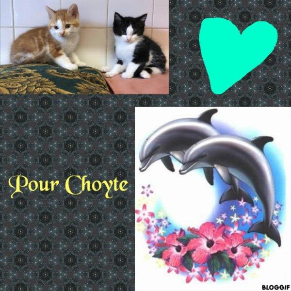Montage 2 chats et 2 dauphins créé par moi pour Choyte