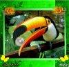 Giff Picmix Un toucan