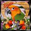 Giff Picmix Un perroquet