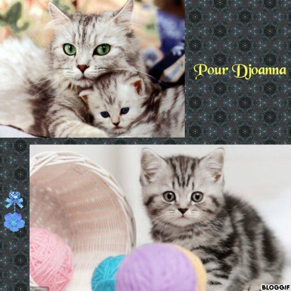 Montage 3 chats créé par moi pour Djoanna