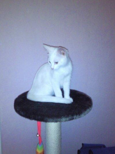 mon chat et celui d'Alexandre, trop mimi....