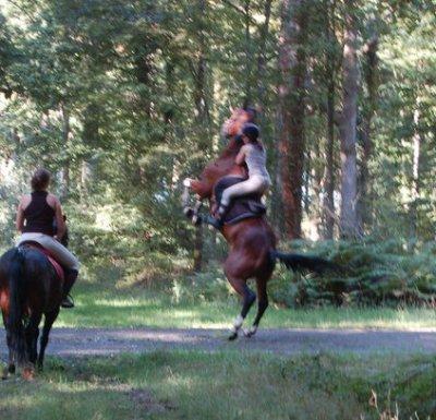 Vous nous dites souvent que l'équitation n'est pas un sport.!