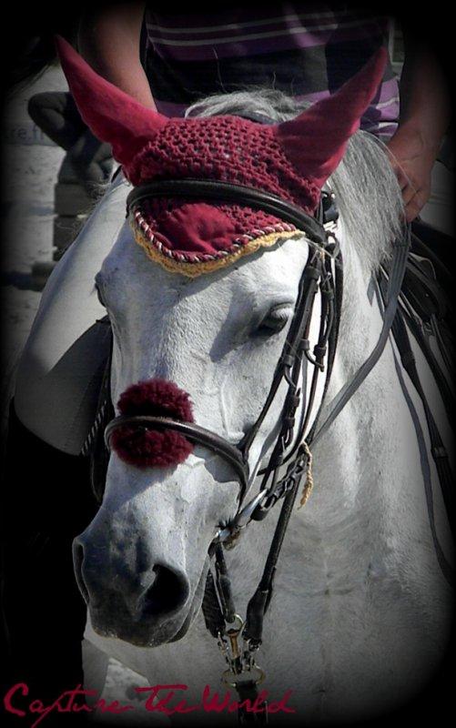 Portrait Equin