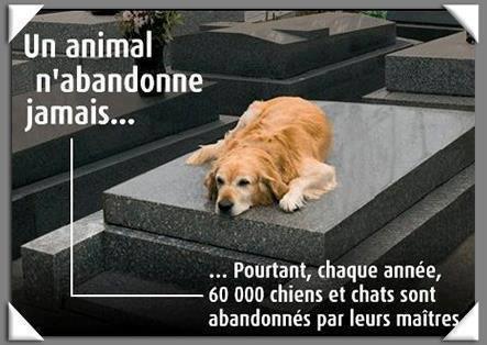 L'ABONDON C'EST CRUEL!!!!!!!!!!!!!!!!!!!!!!!!
