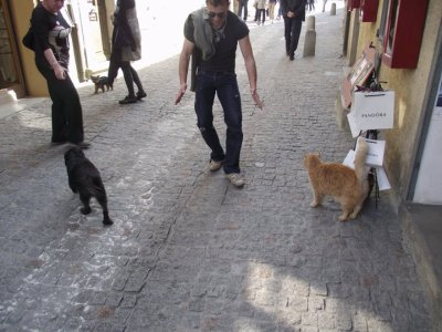 retirada del perro