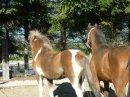 Photo de my-perfect-horses