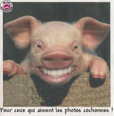 Tete de cochon photos images insolites marrantes dr les - Tete de cochon a colorier ...