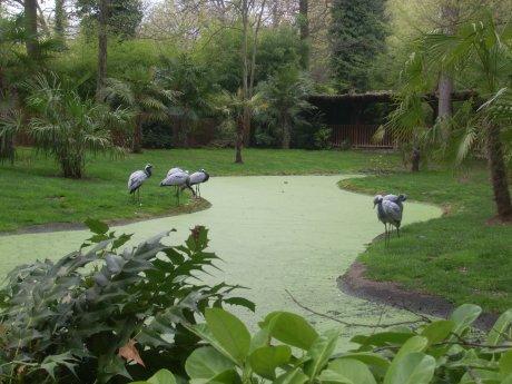 le tres jolie zoo d 'amneville  . . .