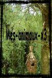 Photo de mes-animaux-x3